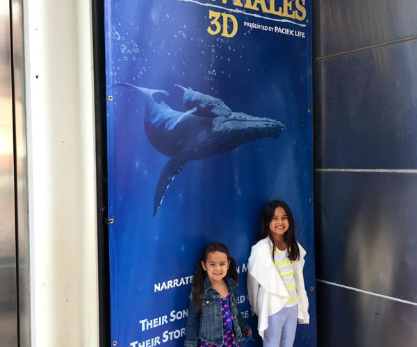 Family fun with Humpback Whales 3D